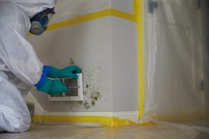 Why Get a Mold Inspection When Buying a House in Conyers, Georgia?