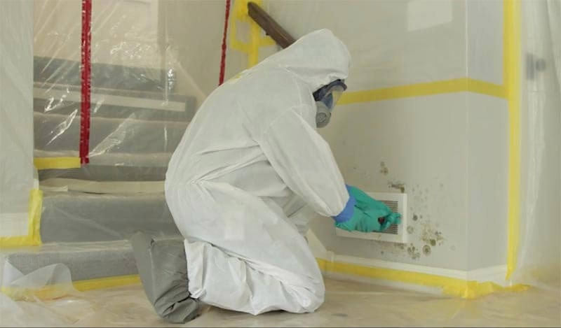 Read more about the article Mold Removal Service – 3 Facts You Should Know Before Cleaning Mold Yourself