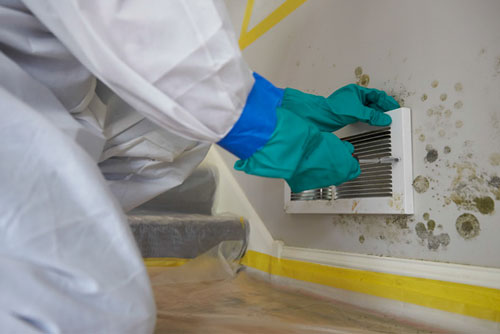 How to Get Rid of Mold on Walls in Your Home or Business