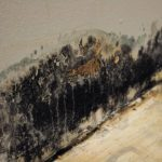 Mold in the House