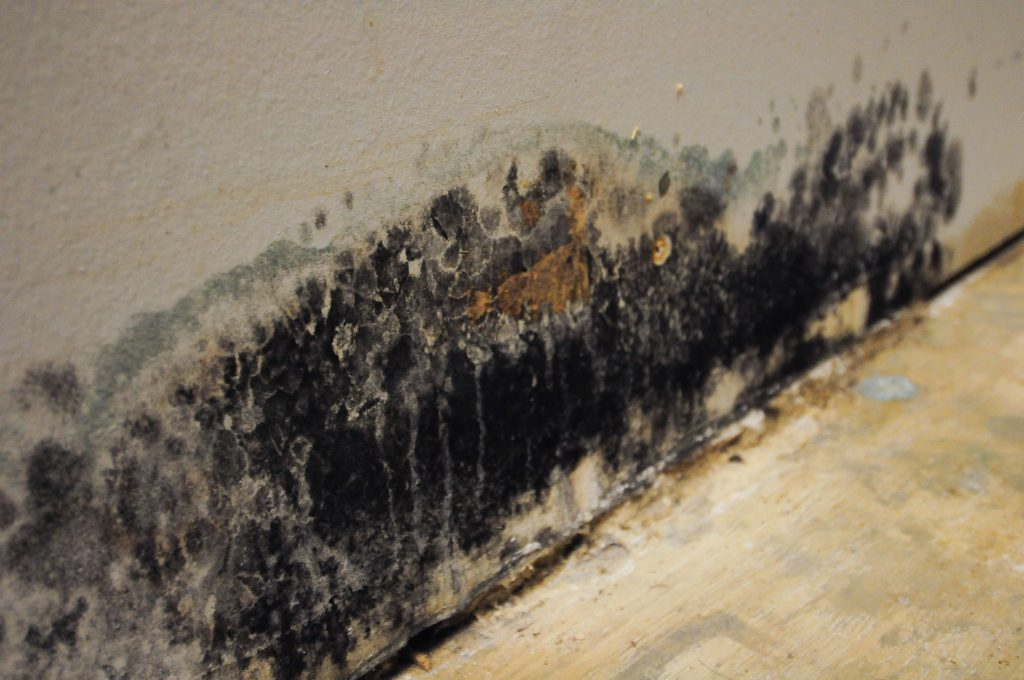 Tips to Prevent Mold on Your Home's Siding