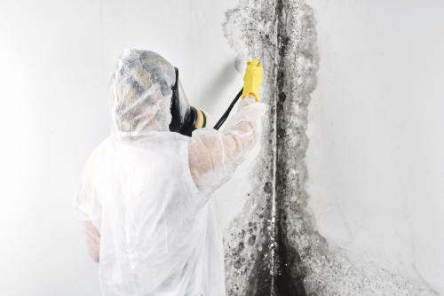 How Does Mold Affect Structural Integrity