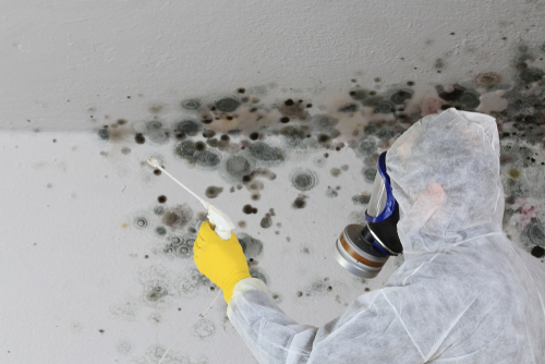 Health Risks Associated With Mold Growth