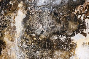 Getting Mold Out of the Carpet: Mold Remediation by ServiceMaster by Lovejoy