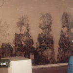 Mold Damage on the Wall