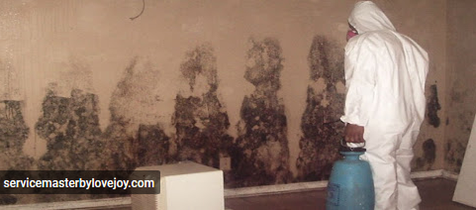 Benefits of Hiring Mold Inspection and Remediation Professional