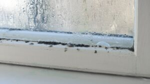 How to Limit Mold Growth in the Winter Months in Atlanta, Georgia